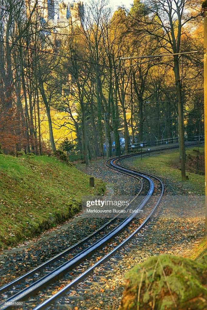 Railroad Track By Trees : Stock Photo