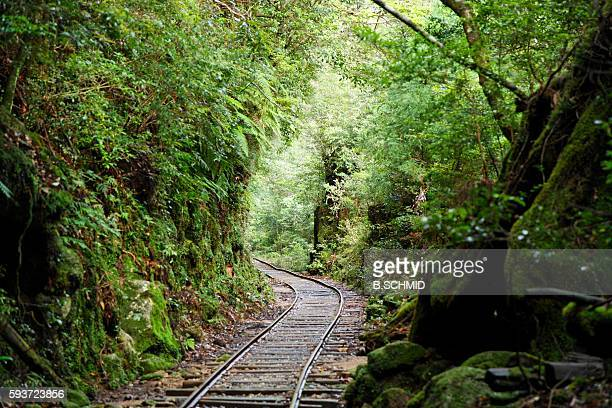 Railroad Track Through Forest, Kagoshima Prefecture, Japan