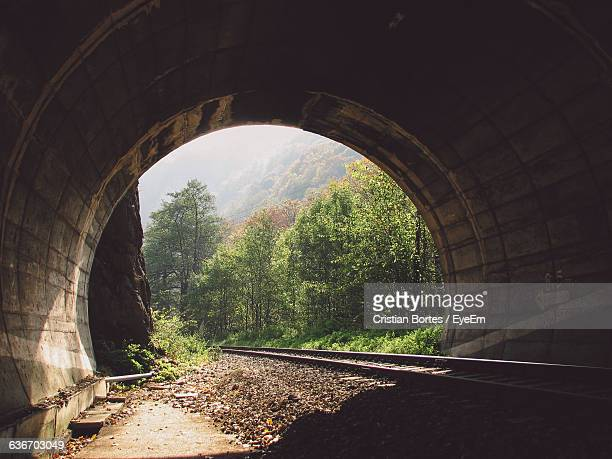railroad tracks in tunnel against trees - bortes stock pictures, royalty-free photos & images