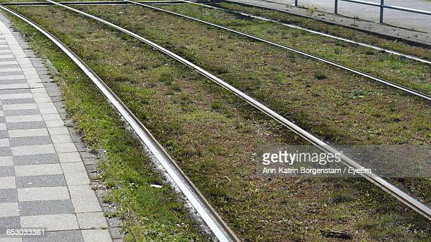 Railroad Tram Track With Grass