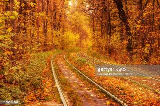 rails in the forest - ウクライナ トンネル ストックフォトと画像