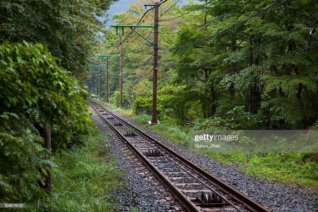 Railway through forest : Stockfoto