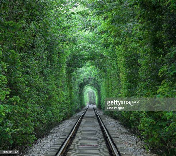 Railway track in green tunnel