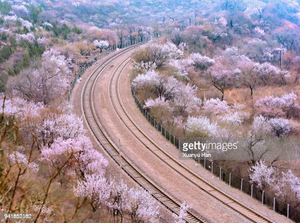 railway track in spring - peach blossom stock pictures, royalty-free photos & images