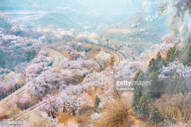 railway tracks through spring landscape - apricot tree stock pictures, royalty-free photos & images