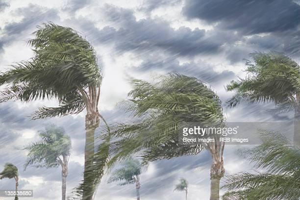 rain and storm winds blowing trees - fury stock pictures, royalty-free photos & images