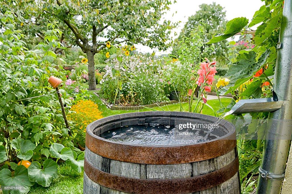 Regen fass im Garten : Stock-Foto