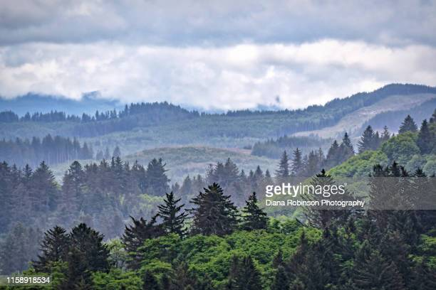 rain clouds over hiking trail at nestucca bay national wildlife refuge near cloverdale, oregon - pacific northwest stock pictures, royalty-free photos & images