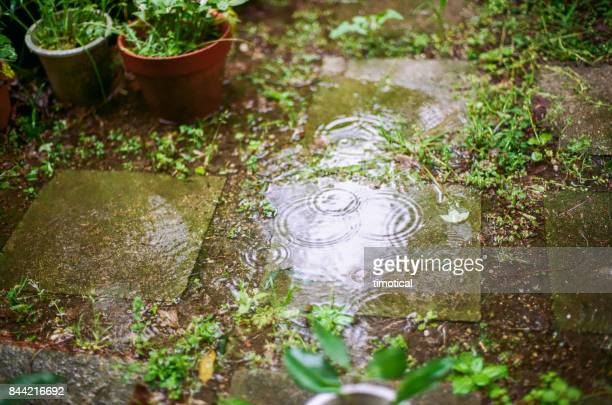 rain drops leaving rings on the water in garden - rainy season stock pictures, royalty-free photos & images