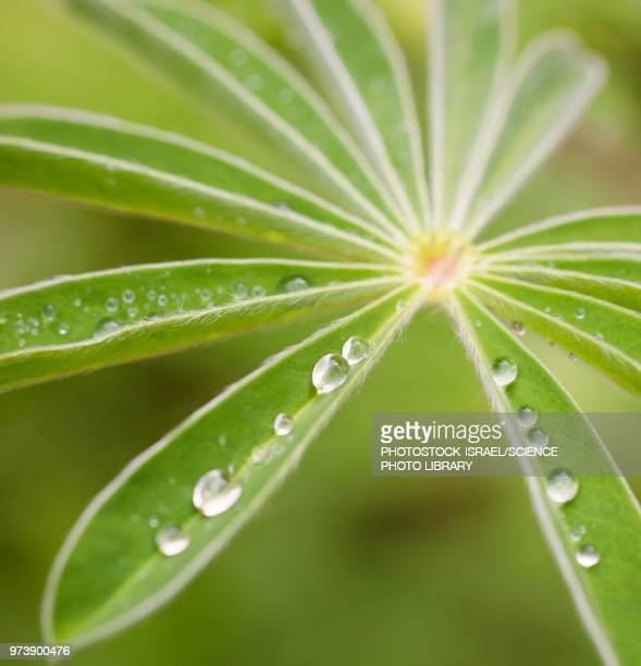 rain drops on a green leaf - photostock stock pictures, royalty-free photos & images