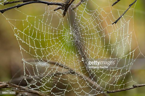Rain drops on a spider web on the Nyika Plateau Nyika National Park in Malawi
