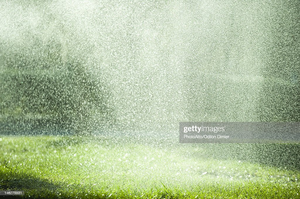 Rain falling on grass : Stock Photo