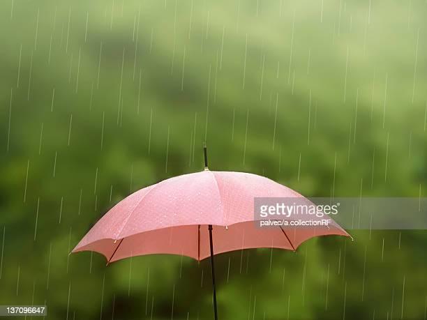 Rain Falling on Umbrella