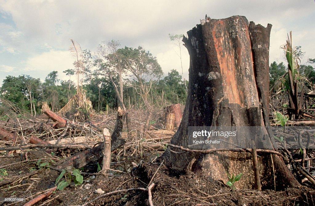 Rain forest Destruction in Belize : Stock Photo