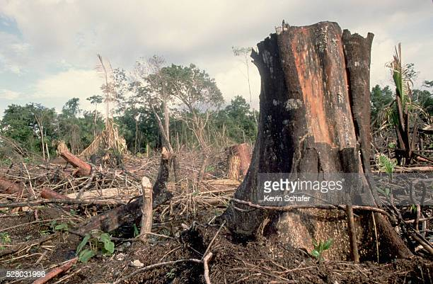 Rain forest Destruction in Belize
