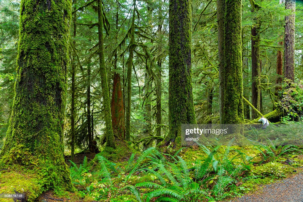 Foresta pluviale in Oregon : Foto stock