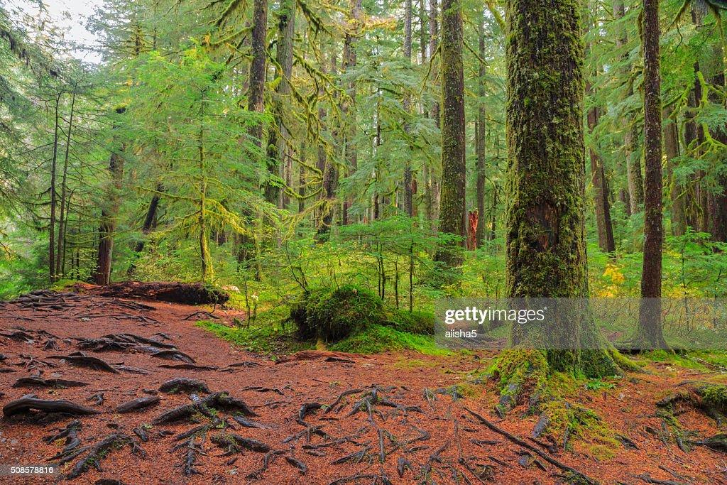 Foresta pluviale in Oregon : Foto stock