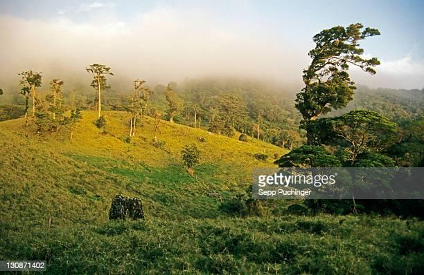 rain forest paradise of natur costa rica - natur photos et images de collection