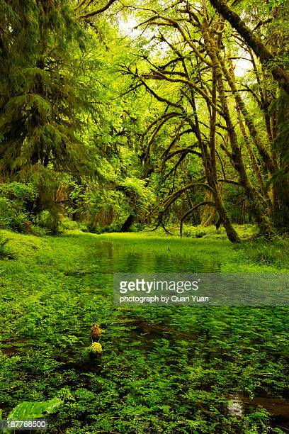 rain forest paradise - yuan quan stock pictures, royalty-free photos & images