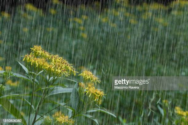 rain forest - extreme weather stock pictures, royalty-free photos & images