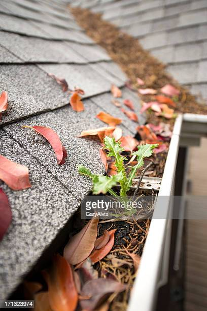 Rain gutter full of leaves and debris