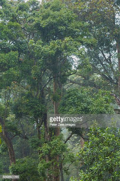 Rain in the tropical forest