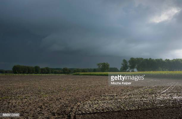 rain over flanders fields, oostkamp, west flanders, belgium - belgium stock pictures, royalty-free photos & images