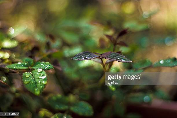 rain - annfrau stock photos and pictures