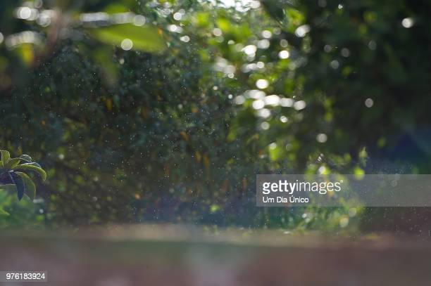 rain - um animal stockfoto's en -beelden