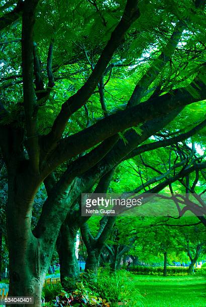 rain trees - neha gupta stock pictures, royalty-free photos & images
