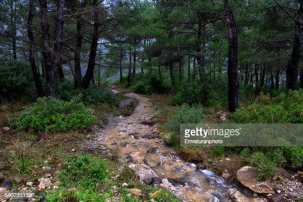 rain water going through pine forest - emreturanphoto stock pictures, royalty-free photos & images