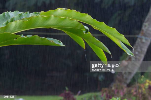 Rain water rolls off of a palm frond during a down pour in Avarua on Rarotonga the largest Island in the Cook Islands on August 27 2012 The island...
