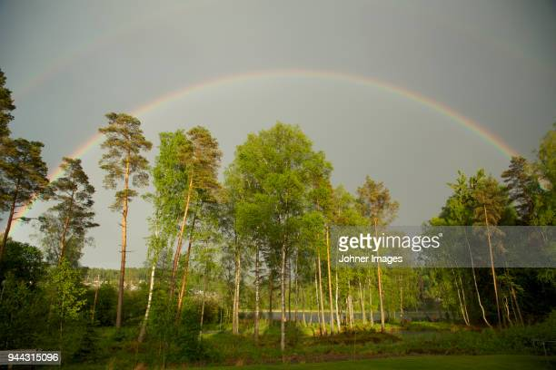 Rainbow above trees