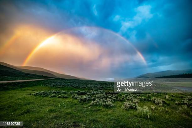 rainbow at scene of wolves on bison carcass - yellowstone national park stock pictures, royalty-free photos & images