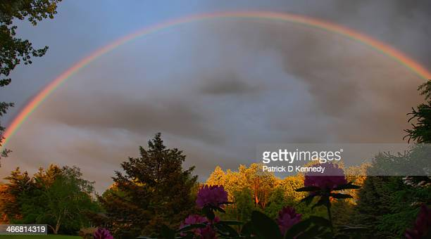 CONTENT] Rainbow dark clouds flowers in foreground warm light on trees