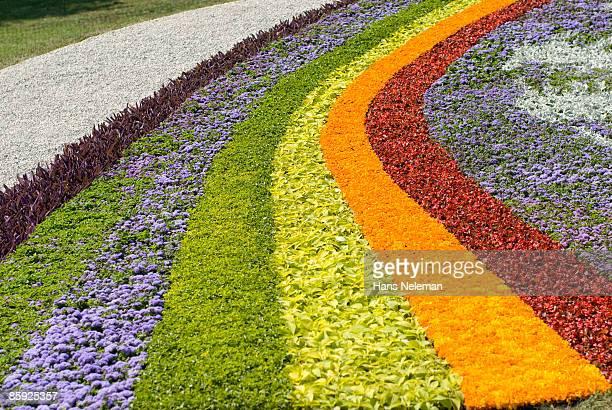 Rainbow designed flower bed.  Kiev, Ukraine