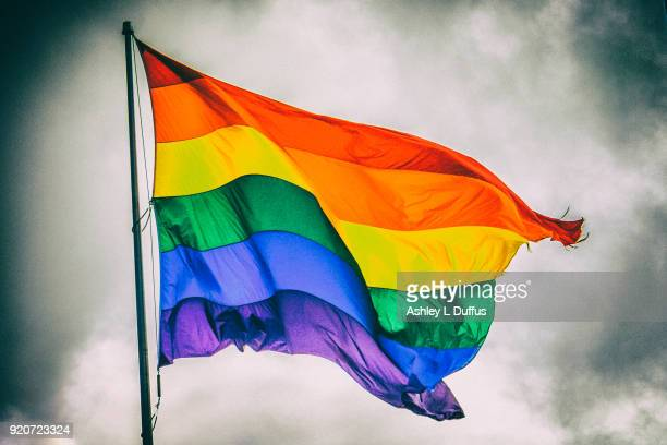 rainbow flag - gay rights stock pictures, royalty-free photos & images