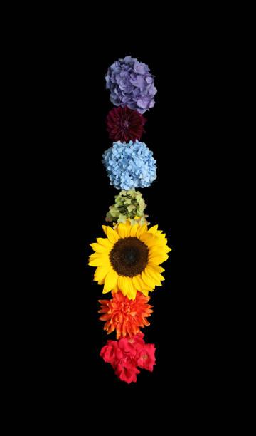 Rainbow Flowers on Black Background
