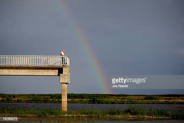 A rainbow graces the sky over a pier built over what should be lake Okeechobee July 9 2007 in Okeechobee Florida The lake has seen record low levels...