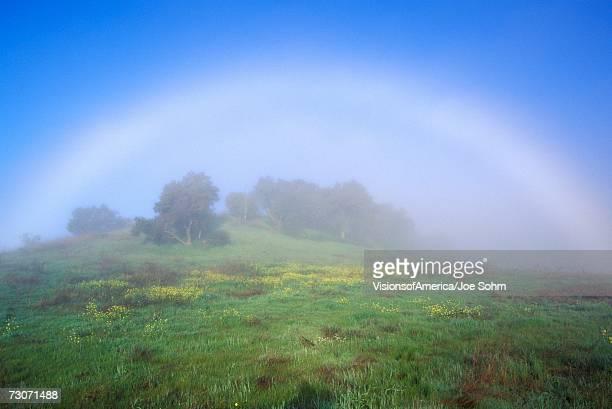 'Rainbow In A Field, Ojai, California'
