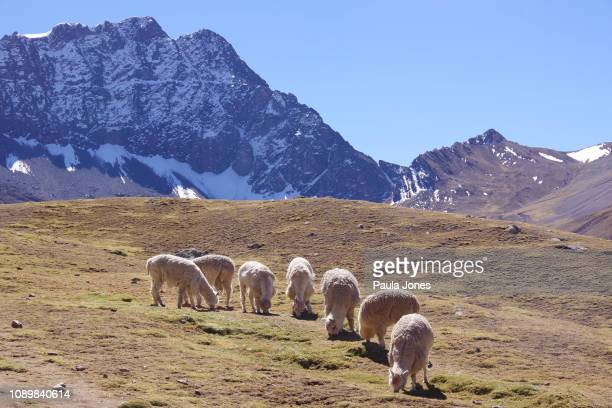 montaña de arco iris, perú - paisajes de peru fotografías e imágenes de stock