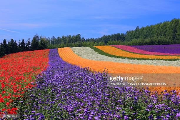Rainbow of Flowers