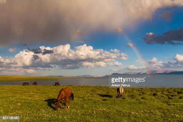 Rainbow over a mountain lake. Horses on the shore of Son-Kul Lake, Kyrgyzstan