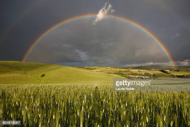 Rainbow over corn field San Quirico, Val d'Orcia