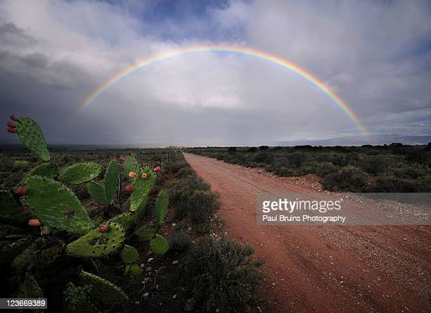 rainbow over dirt road with prickly pear cactus - the karoo stock photos and pictures