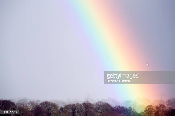 rainbow over new hall valley country park - blue cardinal bird stock pictures, royalty-free photos & images