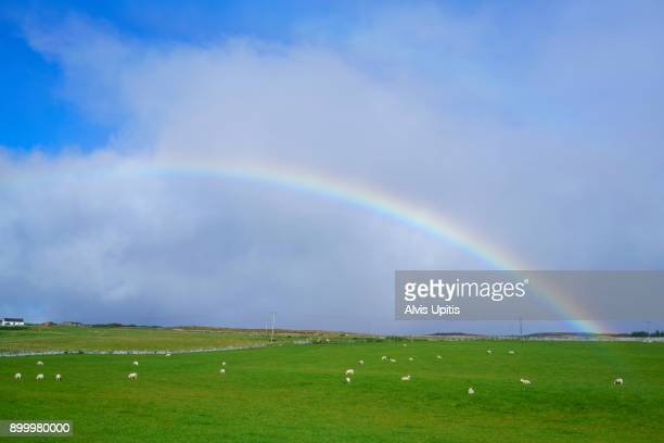 Rainbow over sheep in pasture in Scottish Highlands.