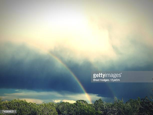 Rainbow Over Trees Against Sky