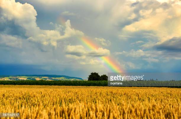 Rainbow over wheat field, Birr, Aargau, Switzerland