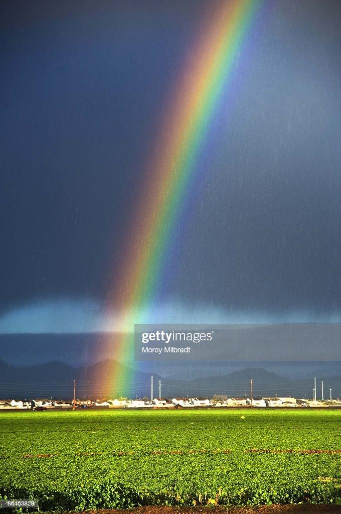 Rainbow : Foto de stock